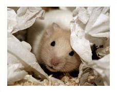 General Hamster Information