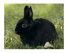 General Rabbit Information